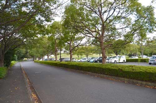 岩槻文化公園内駐車場