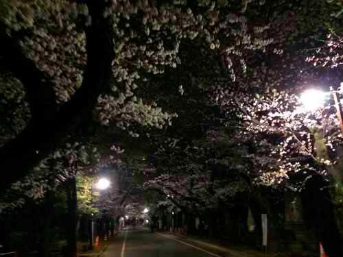 谷中霊園夜の桜並木